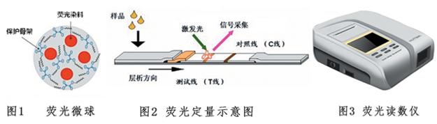 荧光定量POCT技术平台检测原理