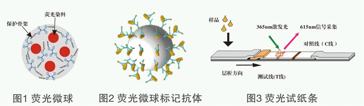 莱克多巴胺荧光检测试纸条原理图