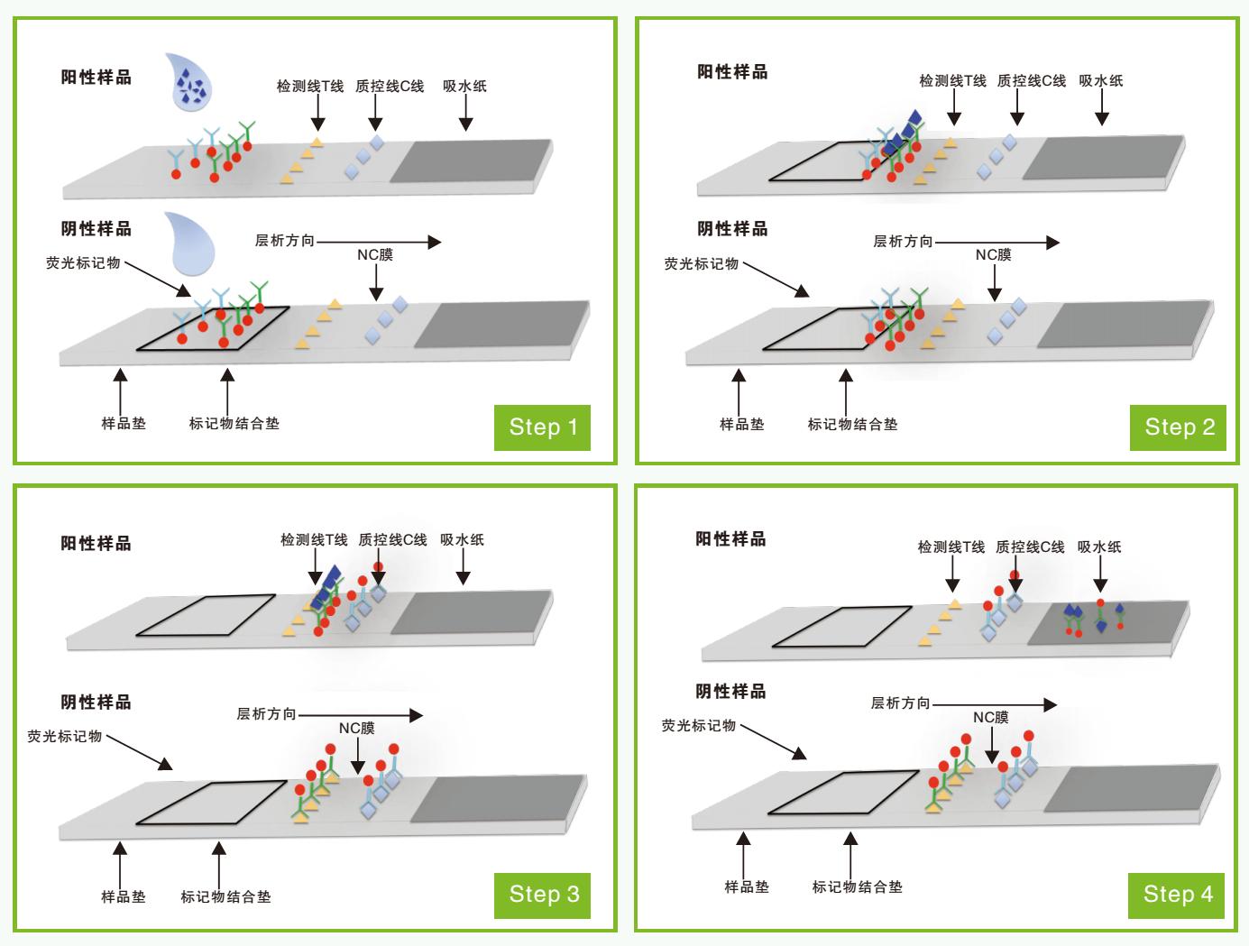 荧光定量免疫层析检测过程示意图