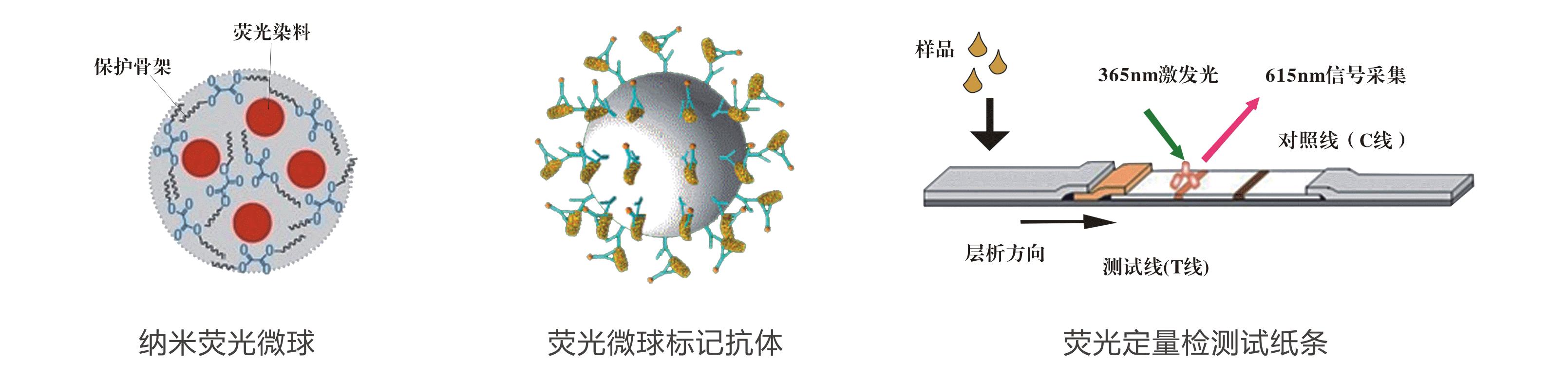 玉米赤霉烯酮荧光定量快速检测试纸条原理